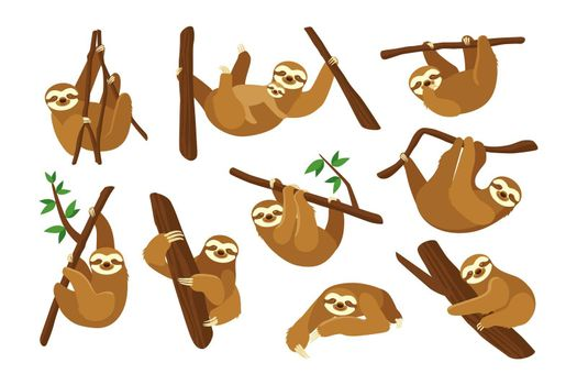 Cute sloth on branch flat pictures collection