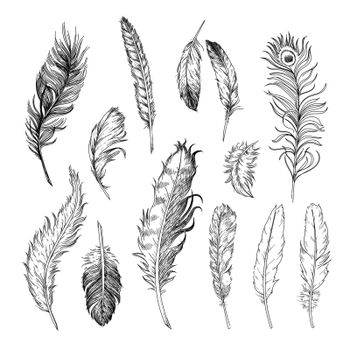 Different feathers of birds engraved illustrations set