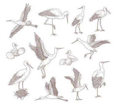 Different storks set