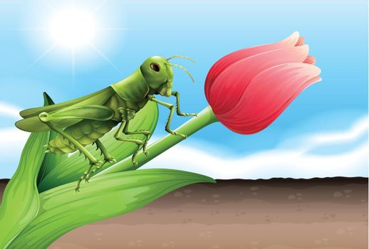 A grasshopper and the flower bud