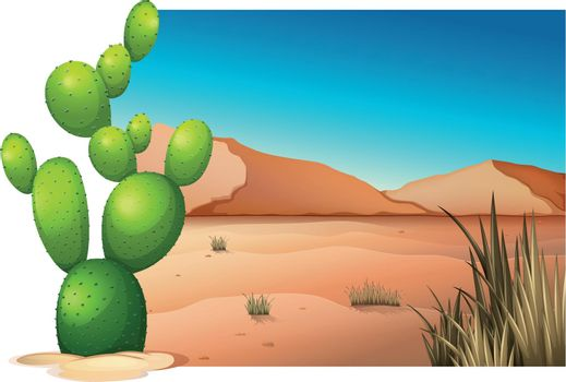 A cactus at the desert