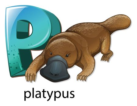 A letter P for platypus