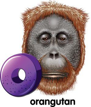 A letter O for orangutan
