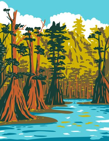 Baldcypress Tree Growing in the Southern Swamp of Apalachicola National Forest Located in the Florida Panhandle WPA Poster Art