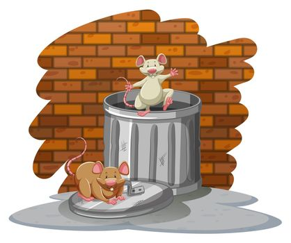 Rats playing with the trashbin