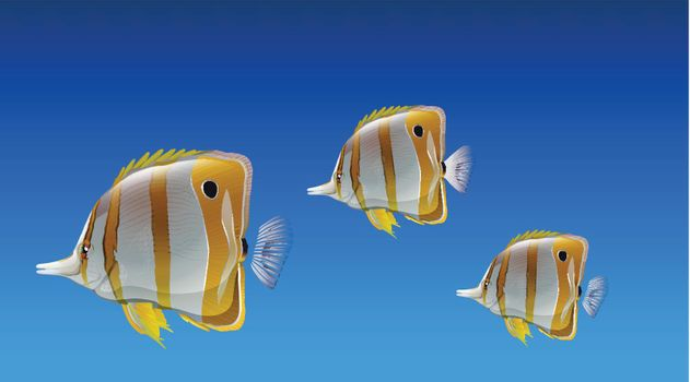 Butterfly fishes