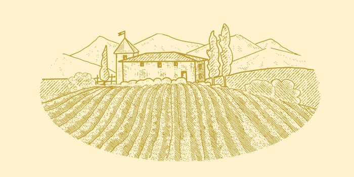 Rural house with a vineyard
