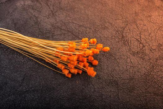 Bunch of dried orange color flower on dark background