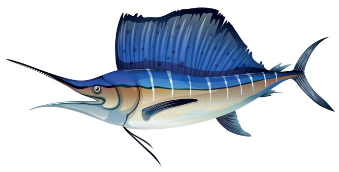 Swordfish with blue fin