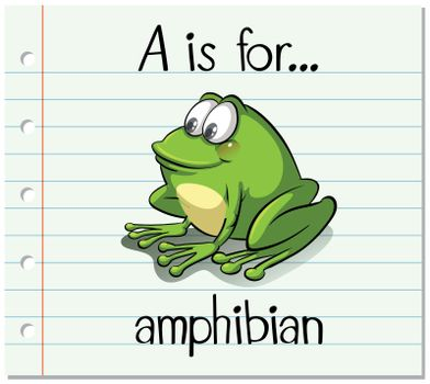 Flashcard letter A is for amphibian
