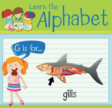 Flashcard letter G is for gills