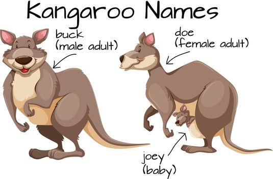 Kangaroo and body part