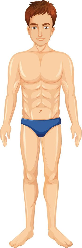 A Healthy Man Body illustration