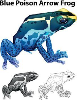 Doodle animal for blue poison arrow frog illustration