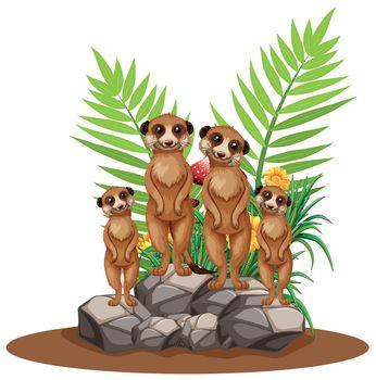 Four meerkats standing on stone illustration