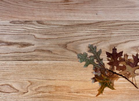 Dried oak leaves on solid American red oak wood boards for industrial concept