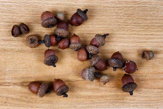 Acorns on solid American red oak wood boards for industrial concept