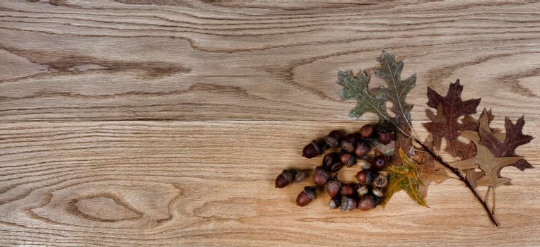 Dried oak leaves and acorns on solid American red oak wood boards for industrial concept
