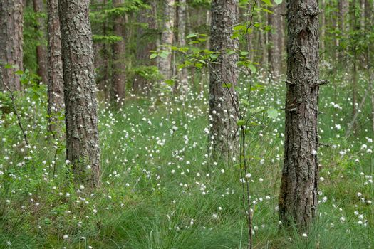 Tall spring grass and white flowers in a shadow forest.