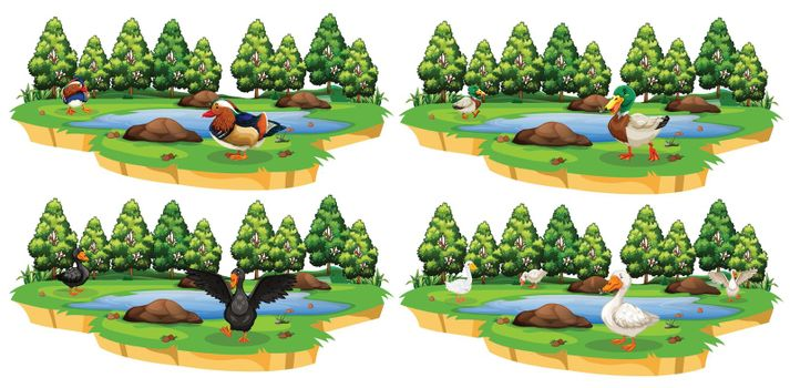 Set of different duck parks