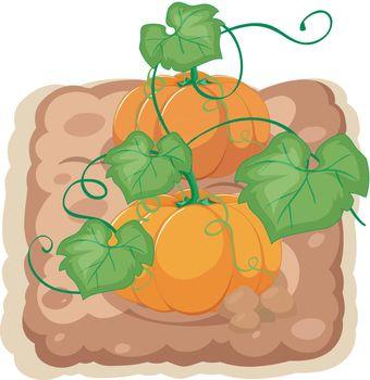 An isolated pumpkin farm illustration