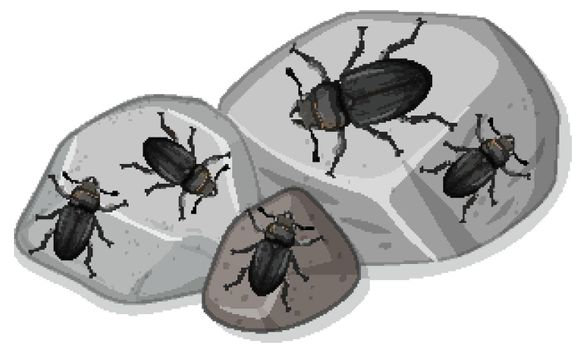 Top view of many stag beetle on stones illustration