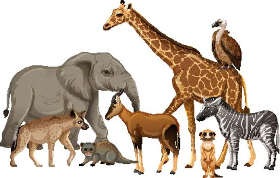 Group of wild african animal on white background
