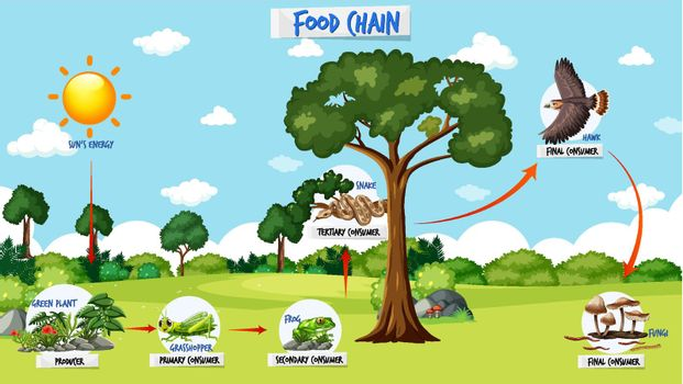 Food chain diagram concept on forest background