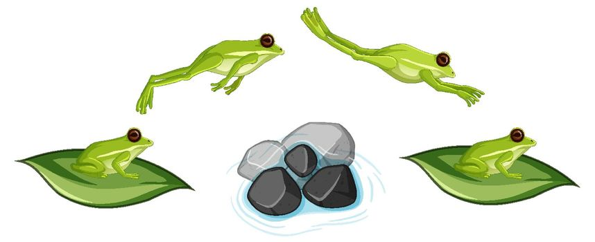 Movement of frog jumping on white background