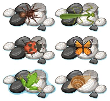 Set of different insects isolated on white background illustration