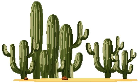 Different shapes of cactus in a group illustration