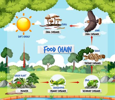 Food chain diagram concept on forest background illustration