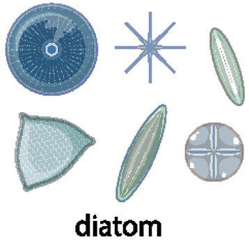 Diatom icons set isolated on white background illustration