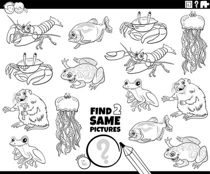 find two same animals task coloring book page