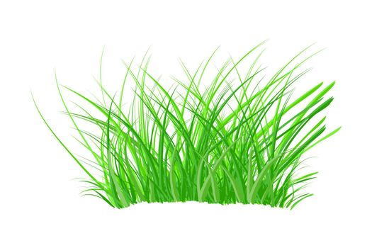 Tuft of grass isolated on white background. Spring bush of fresh grass.