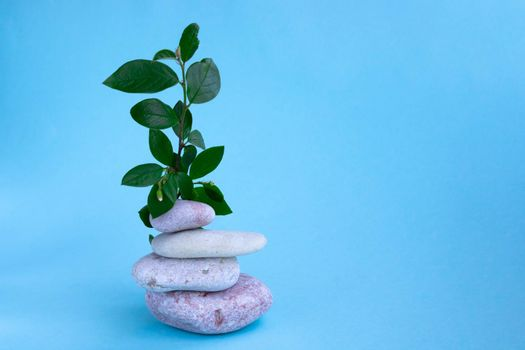 A green branch and a stack of pink stones on a blue background. The concept of a relaxing massage for health