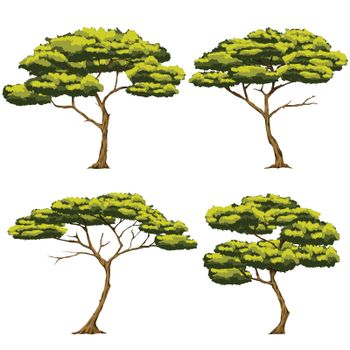 Set vector illustration Of four trees It is a type of tree that grows in the African grasslands