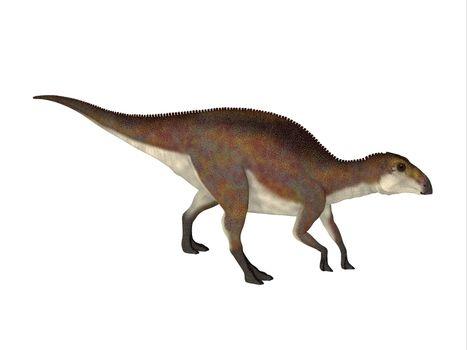 Brachylophosaurus was a herbivorous Hadrosaur dinosaur that lived during the Cretaceous Period of North America.