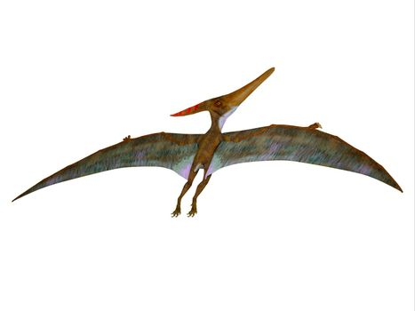 Pteranodon was a carnivorous Pterosaur reptile that flew in North America during the Cretaceous Period.