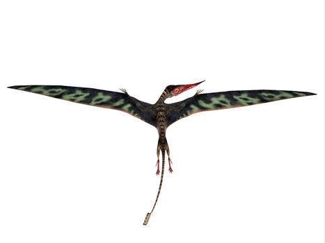Rhamphorhynchus was a carnivorous flying Pterosaur that lived in Europe and Africa during the Jurassic Period.
