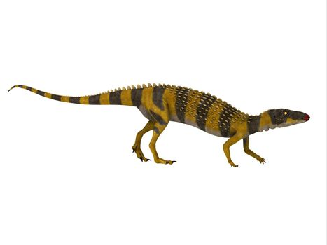 Scutellosaurus was an armored herbivorous dinosaur that lived in Arizona, USA during the Jurassic Period.