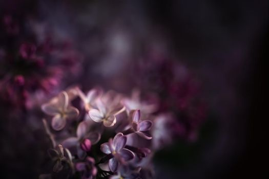 Close-up image of lilac flowers in springtime