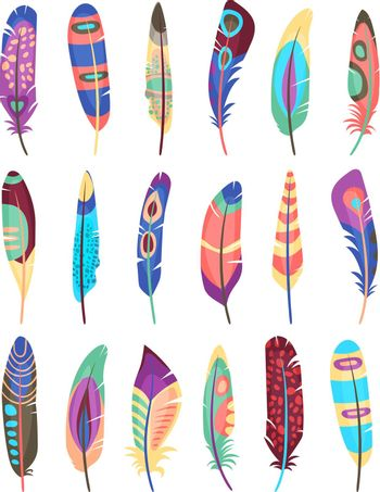 Vector colored feathers set