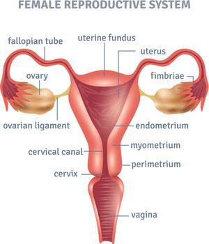 Uterus Poster