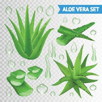 Aloe Vera Plant On Transparent Background