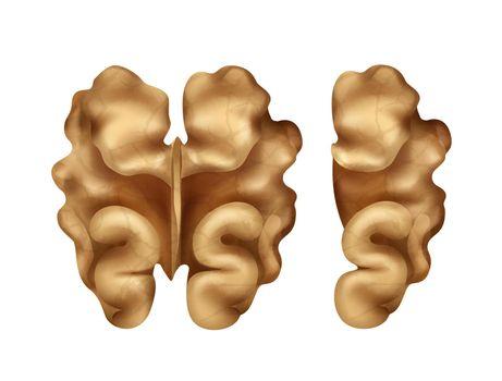 Two walnut kernels