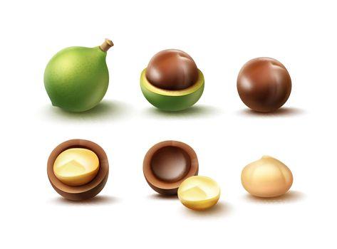 Set of macadamia nuts