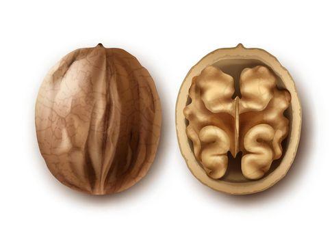 Two ripe walnuts