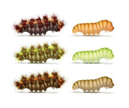 Set of caterpillars