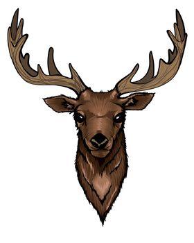 Wild Deer Head Portrait